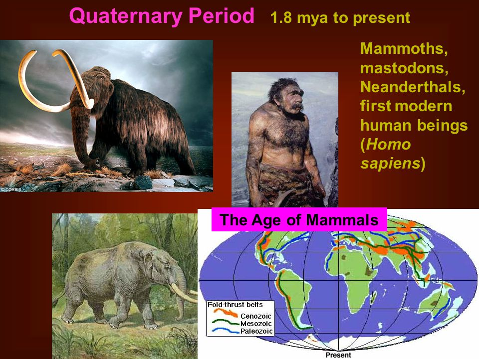 Quaternary Period 1.8 mya to present