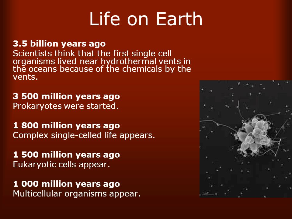 Life on Earth 3.5 billion years ago