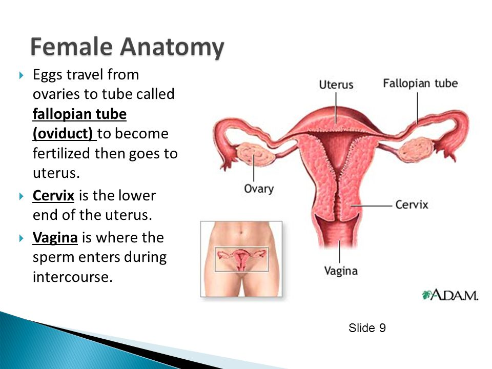 Cervix is the lower end of the uterus.