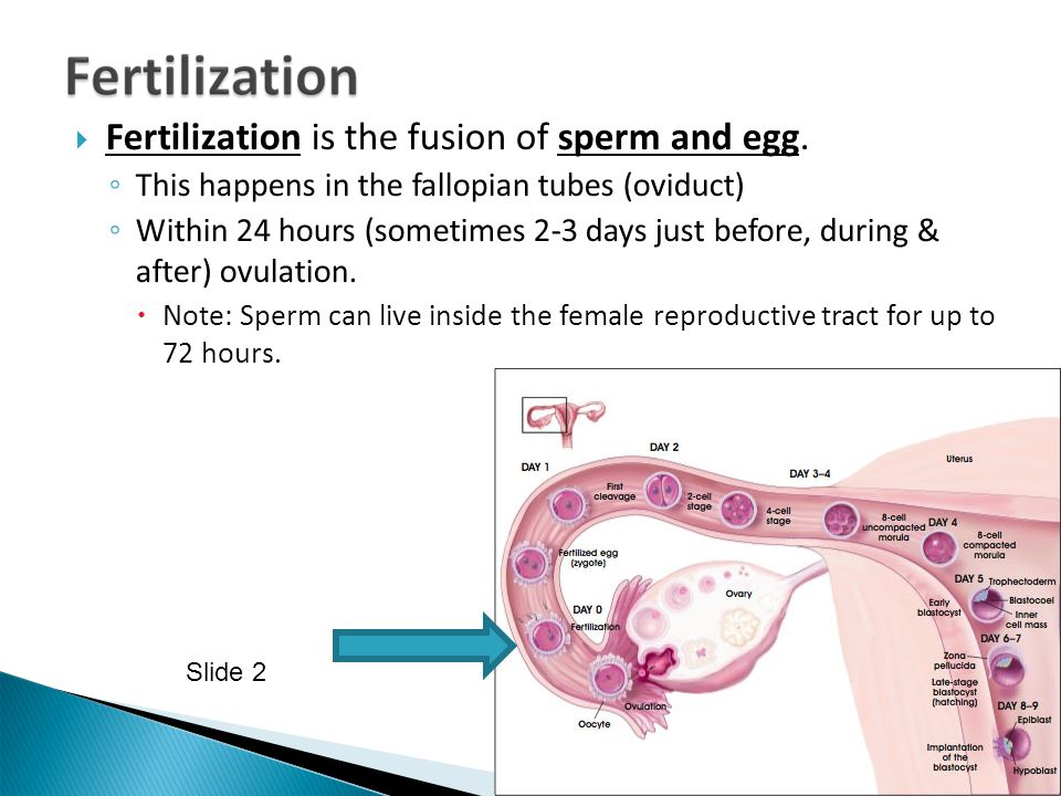 Fertilization is the fusion of sperm and egg.