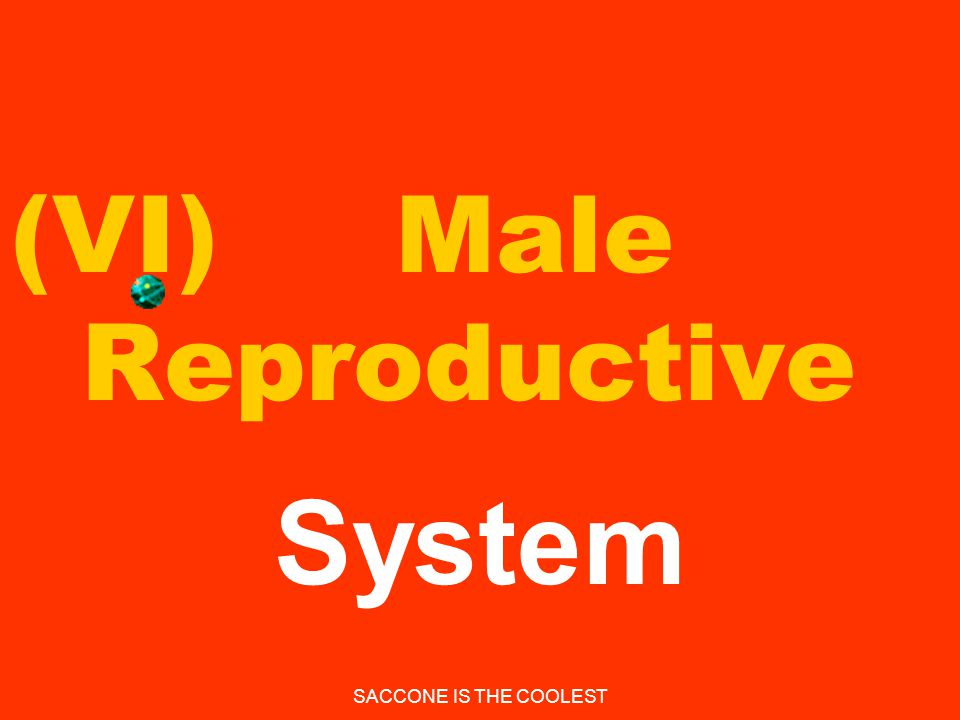 (VI) Male Reproductive