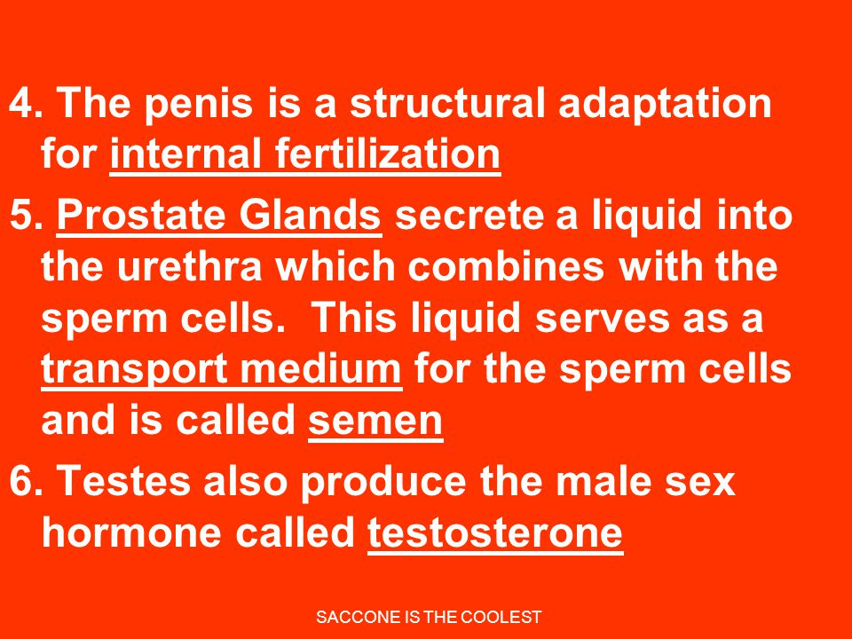4. The penis is a structural adaptation for internal fertilization