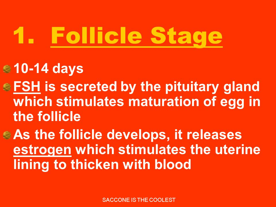 1. Follicle Stage 10-14 days. FSH is secreted by the pituitary gland which stimulates maturation of egg in the follicle.