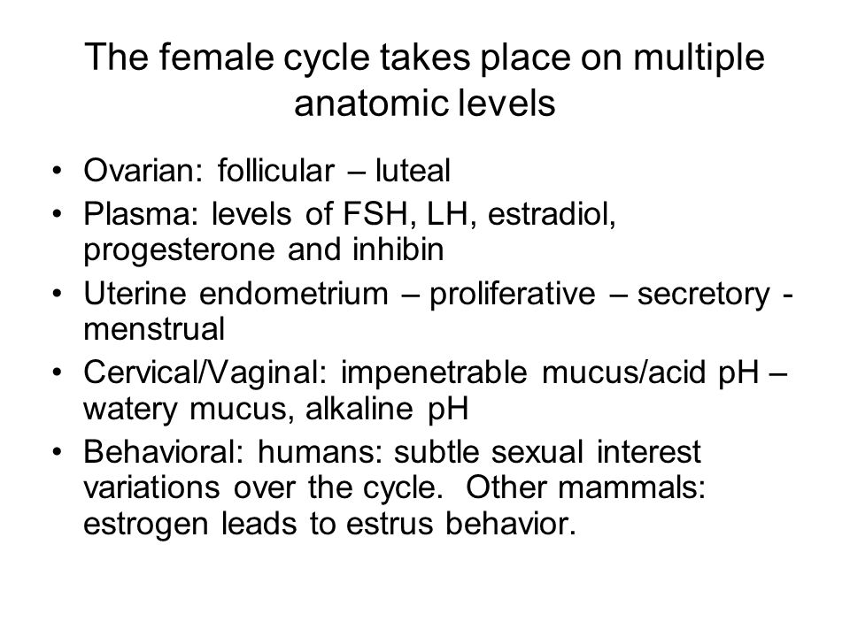 The female cycle takes place on multiple anatomic levels