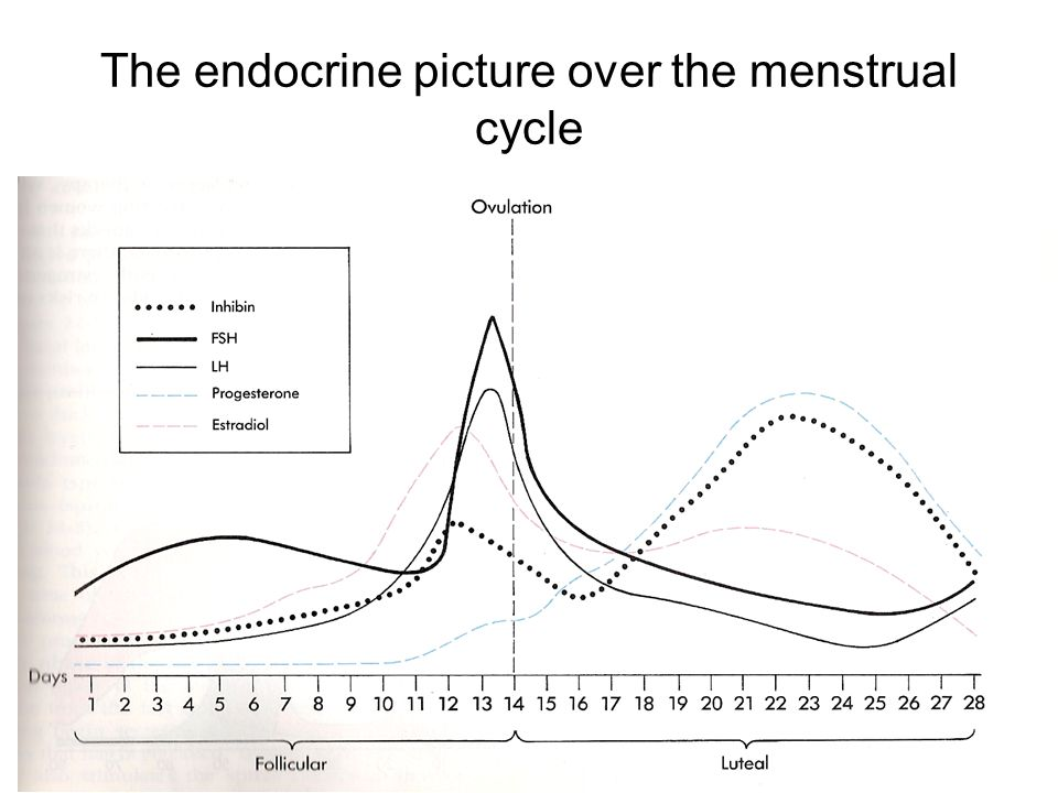 The endocrine picture over the menstrual cycle