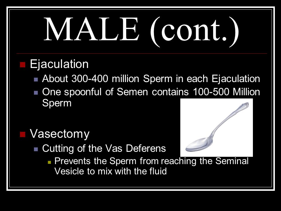 MALE (cont.) Ejaculation Vasectomy