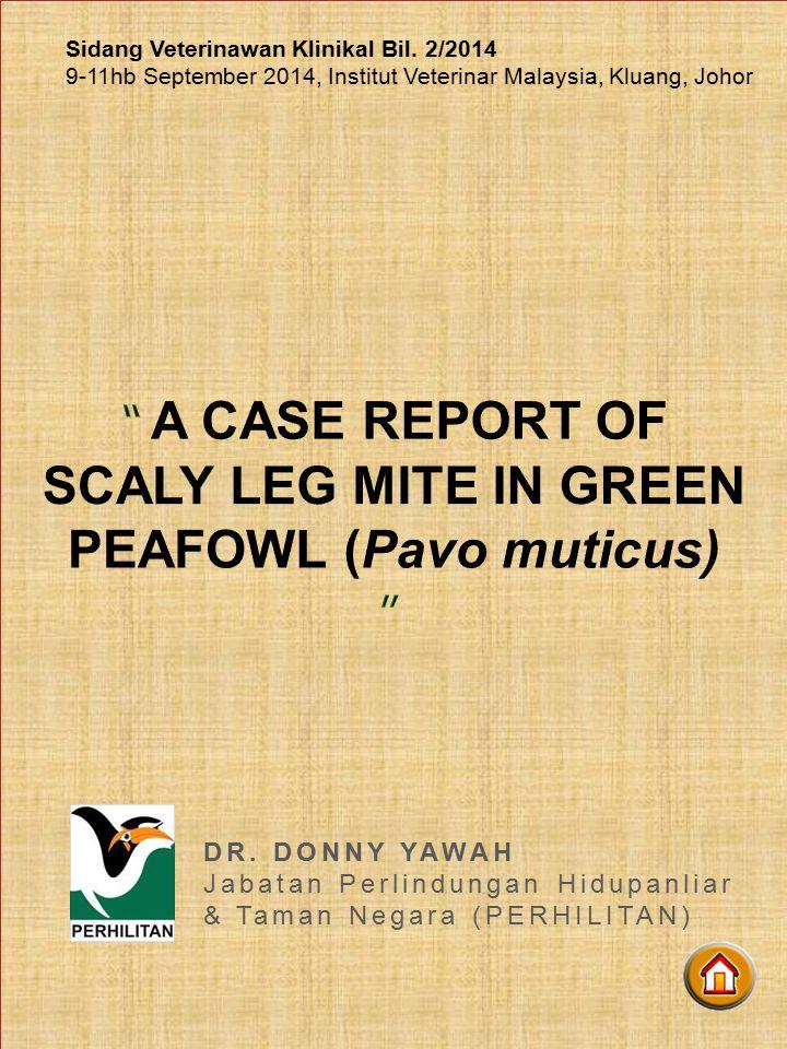SCALY LEG MITE IN GREEN PEAFOWL (Pavo muticus)
