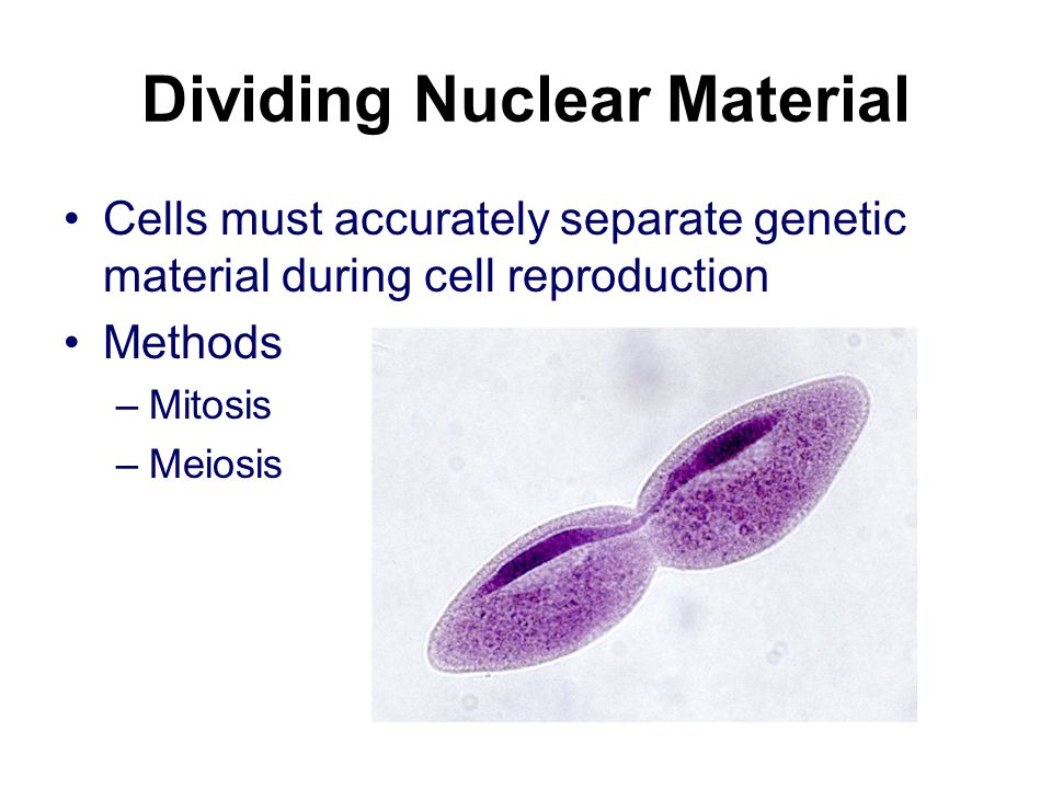 Dividing Nuclear Material