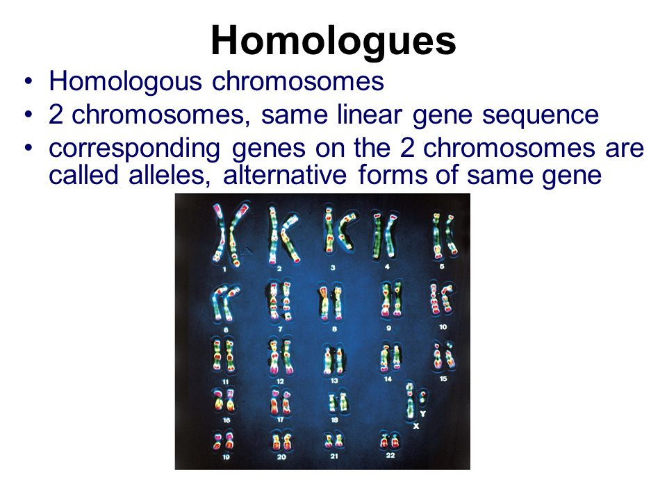 Homologues Homologous chromosomes