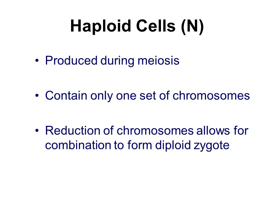 Haploid Cells (N) Produced during meiosis