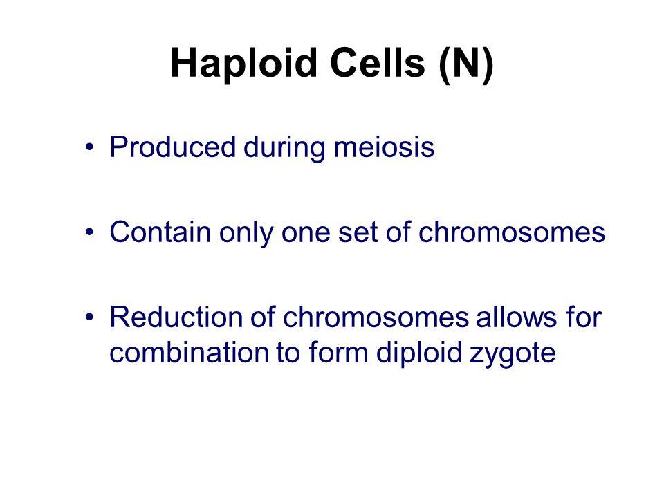 Haploid Cells (N) Produced during meiosis
