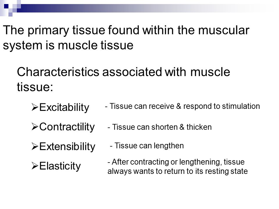 The primary tissue found within the muscular system is muscle tissue