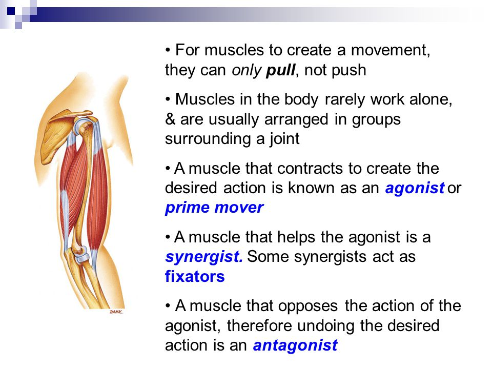 For muscles to create a movement, they can only pull, not push