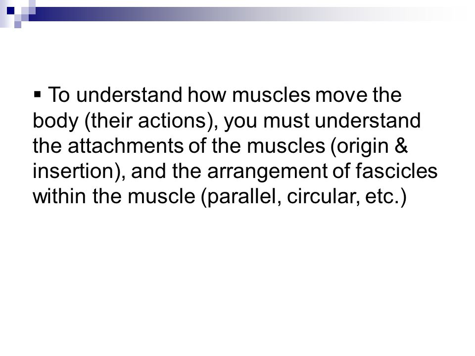 To understand how muscles move the body (their actions), you must understand the attachments of the muscles (origin & insertion), and the arrangement of fascicles within the muscle (parallel, circular, etc.)