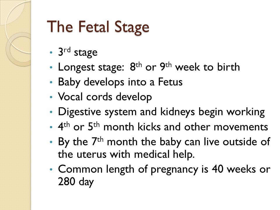 The Fetal Stage 3rd stage Longest stage: 8th or 9th week to birth
