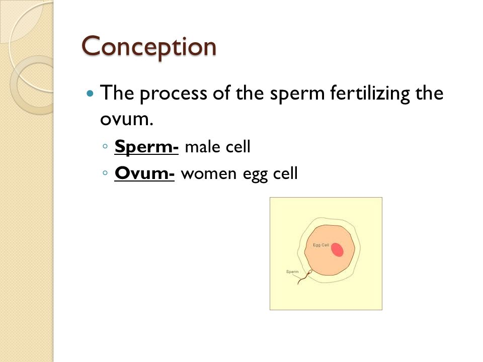 Conception The process of the sperm fertilizing the ovum.