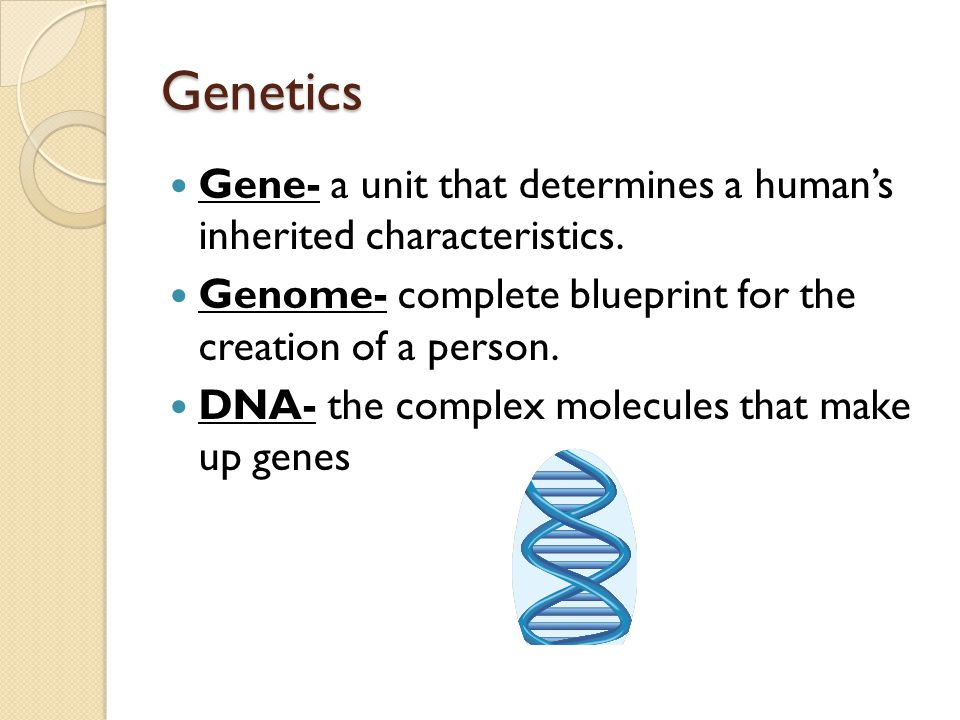 Genetics Gene- a unit that determines a human's inherited characteristics. Genome- complete blueprint for the creation of a person.