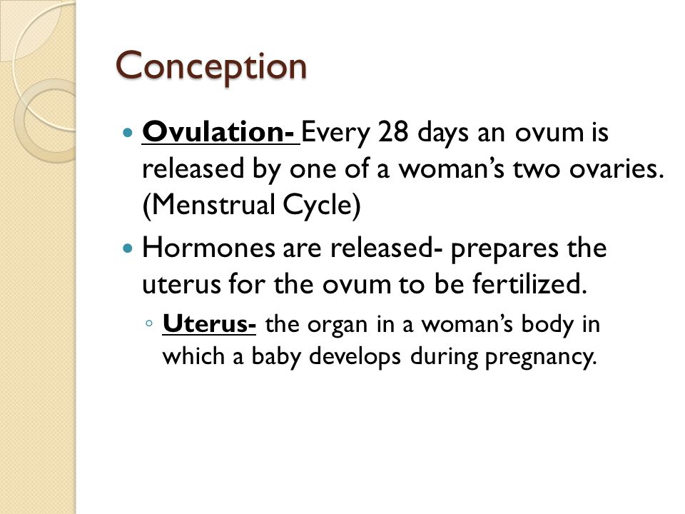 Conception Ovulation- Every 28 days an ovum is released by one of a woman's two ovaries. (Menstrual Cycle)
