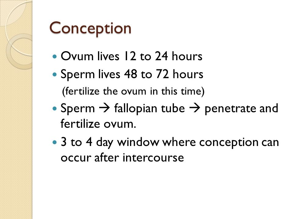 Conception Ovum lives 12 to 24 hours Sperm lives 48 to 72 hours