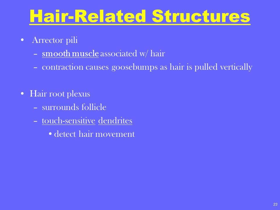 Hair-Related Structures