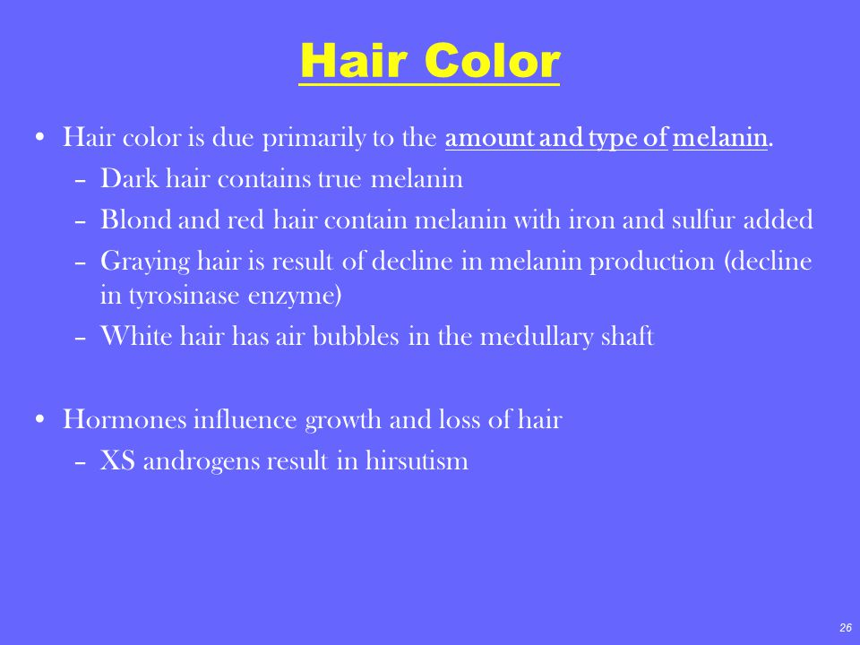 Hair Color Hair color is due primarily to the amount and type of melanin. Dark hair contains true melanin.