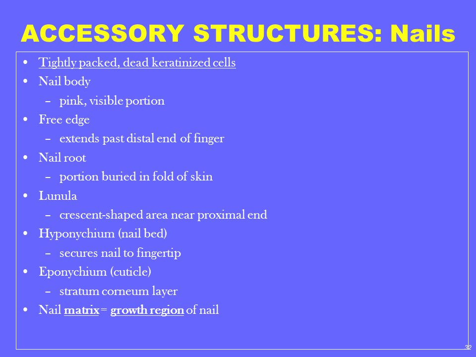 ACCESSORY STRUCTURES: Nails