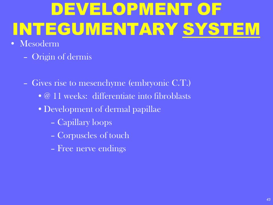DEVELOPMENT OF INTEGUMENTARY SYSTEM