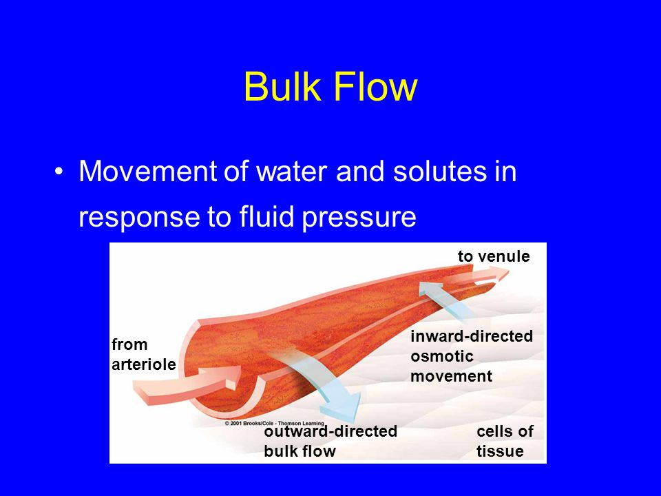Bulk Flow Movement of water and solutes in response to fluid pressure