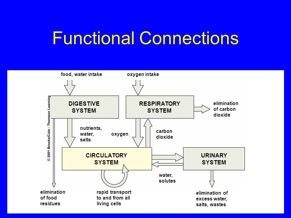 Functional Connections