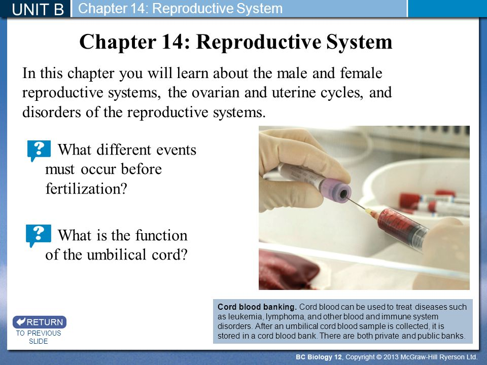 Chapter 14: Reproductive System