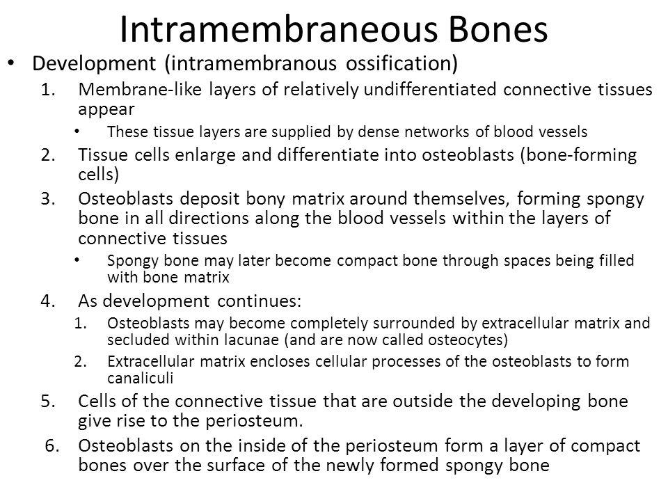 Intramembraneous Bones