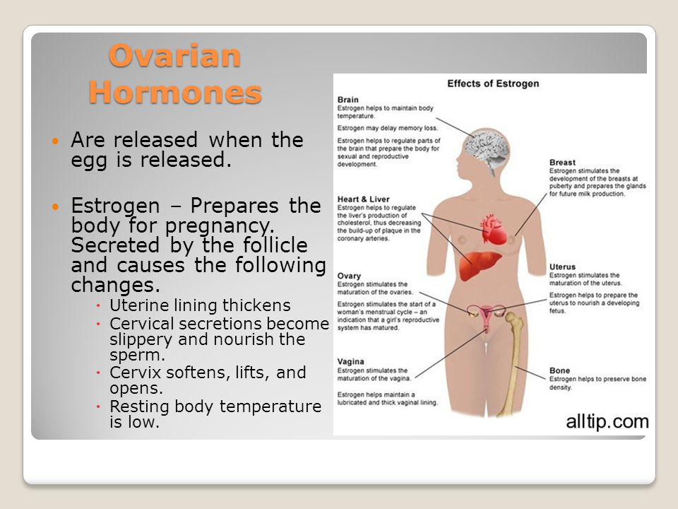 Ovarian Hormones Are released when the egg is released.
