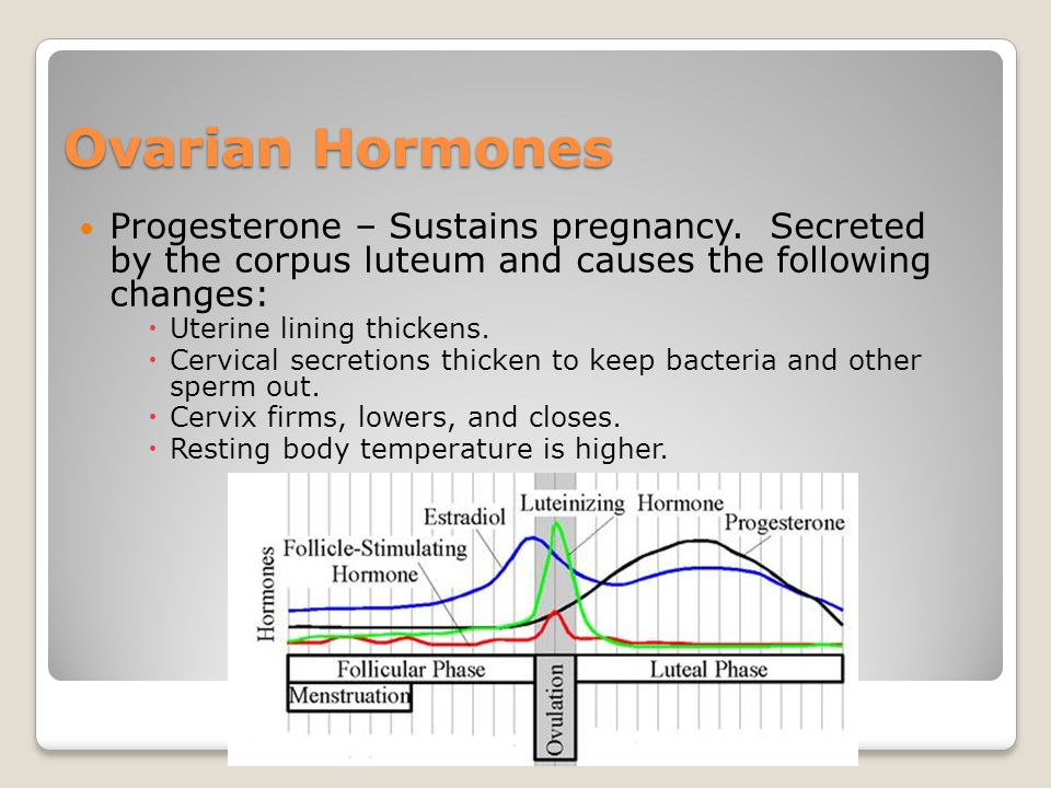 Ovarian Hormones Progesterone – Sustains pregnancy. Secreted by the corpus luteum and causes the following changes: