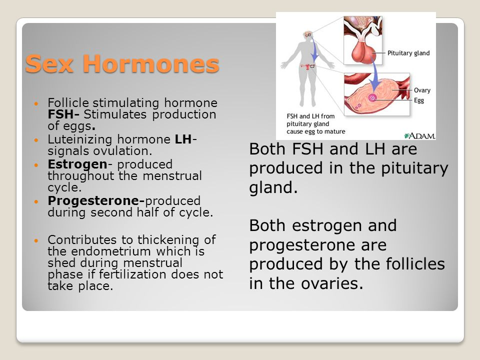 Sex Hormones Both FSH and LH are produced in the pituitary gland.