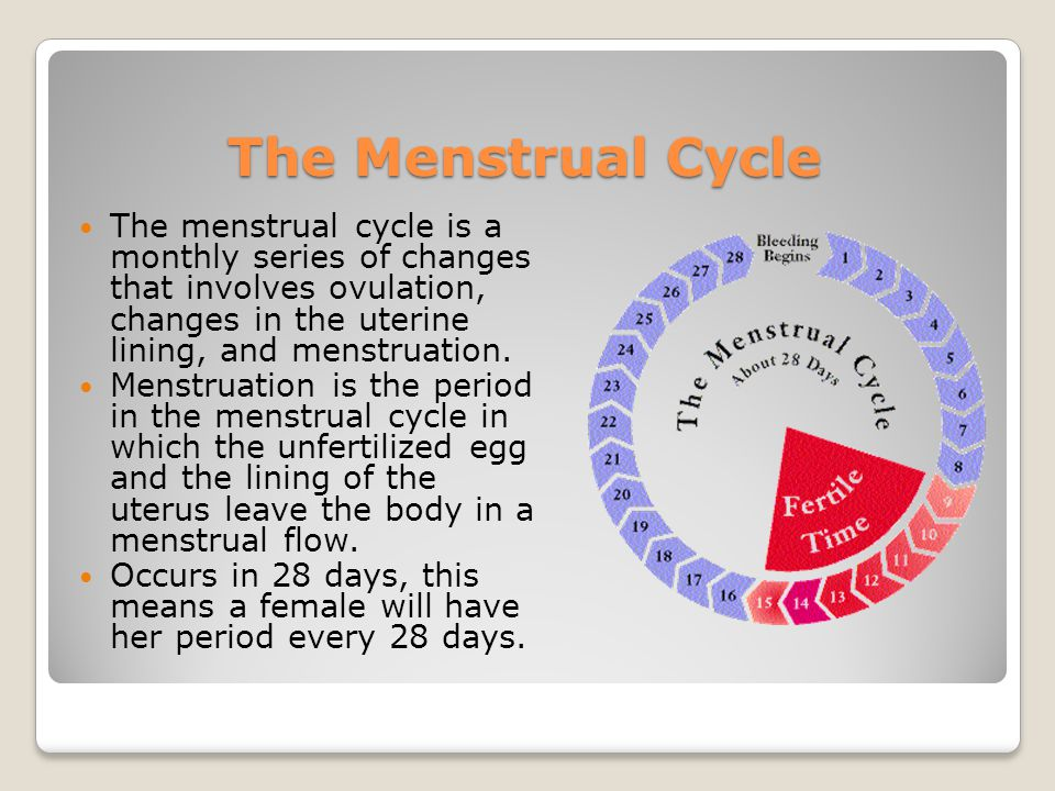 The Menstrual Cycle The menstrual cycle is a monthly series of changes that involves ovulation, changes in the uterine lining, and menstruation.