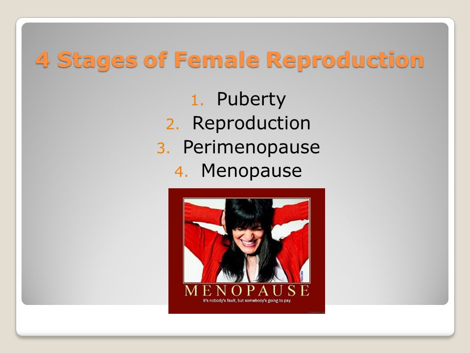 4 Stages of Female Reproduction