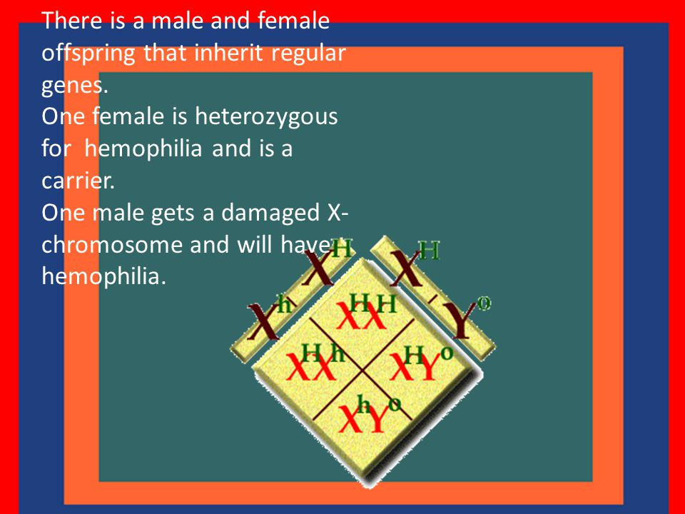 There is a male and female offspring that inherit regular genes