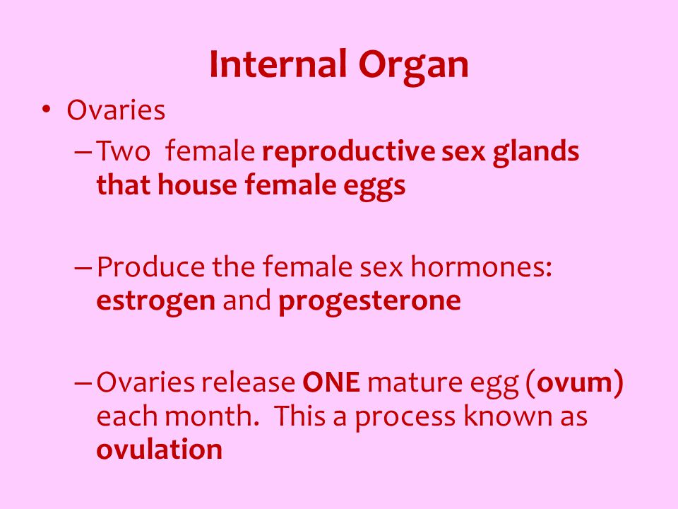 Internal Organ Ovaries
