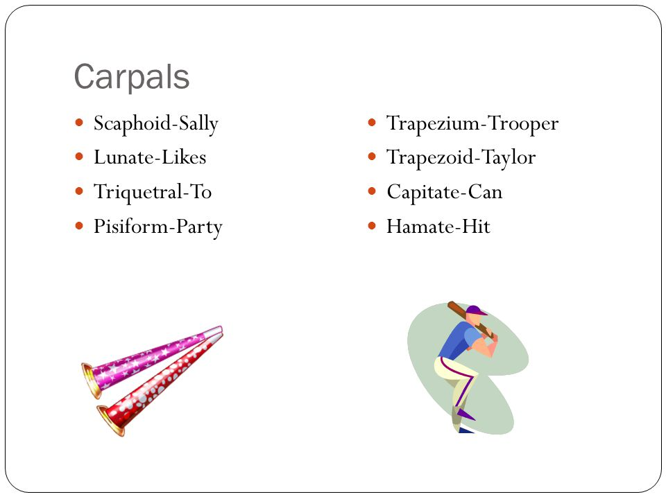 Carpals Scaphoid-Sally Lunate-Likes Triquetral-To Pisiform-Party