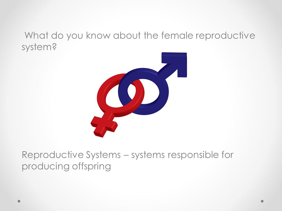 What do you know about the female reproductive system
