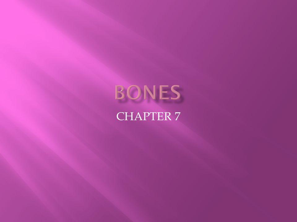 BONES CHAPTER 7