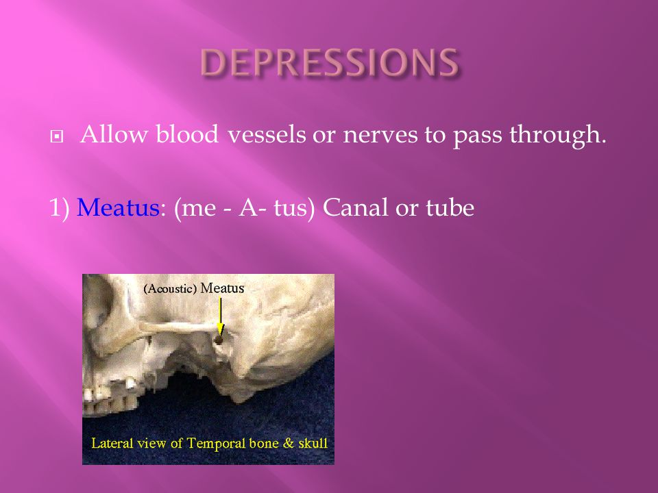 DEPRESSIONS Allow blood vessels or nerves to pass through.