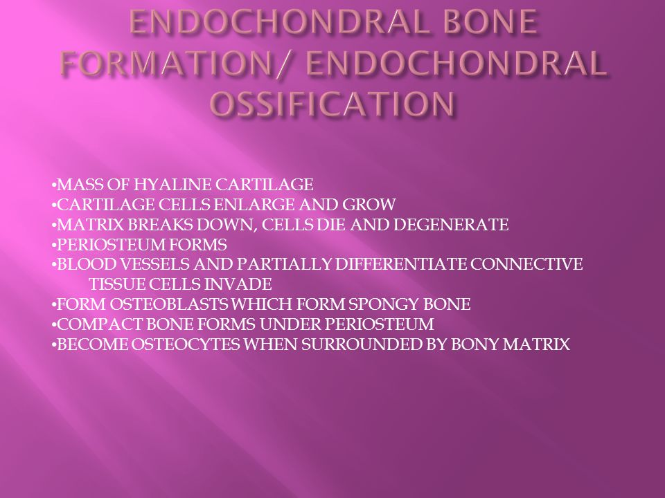 ENDOCHONDRAL BONE FORMATION/ ENDOCHONDRAL OSSIFICATION