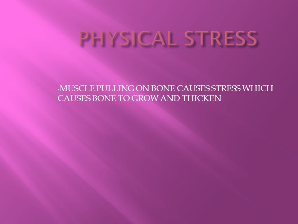 PHYSICAL STRESS MUSCLE PULLING ON BONE CAUSES STRESS WHICH CAUSES BONE TO GROW AND THICKEN