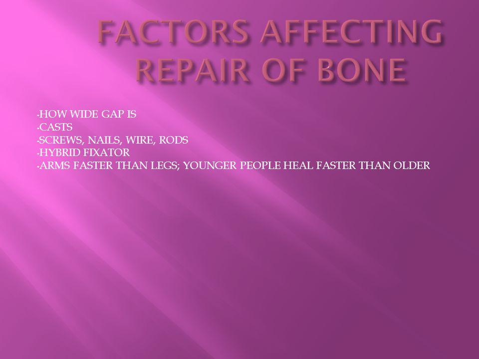 FACTORS AFFECTING REPAIR OF BONE