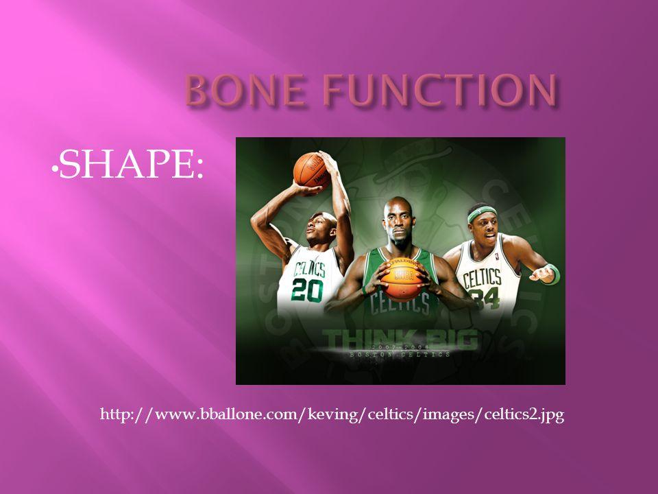 BONE FUNCTION SHAPE: http://www.bballone.com/keving/celtics/images/celtics2.jpg