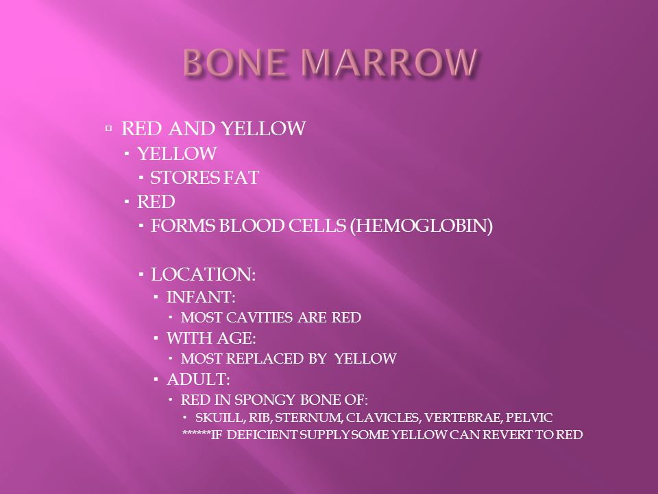 BONE MARROW RED AND YELLOW YELLOW STORES FAT RED