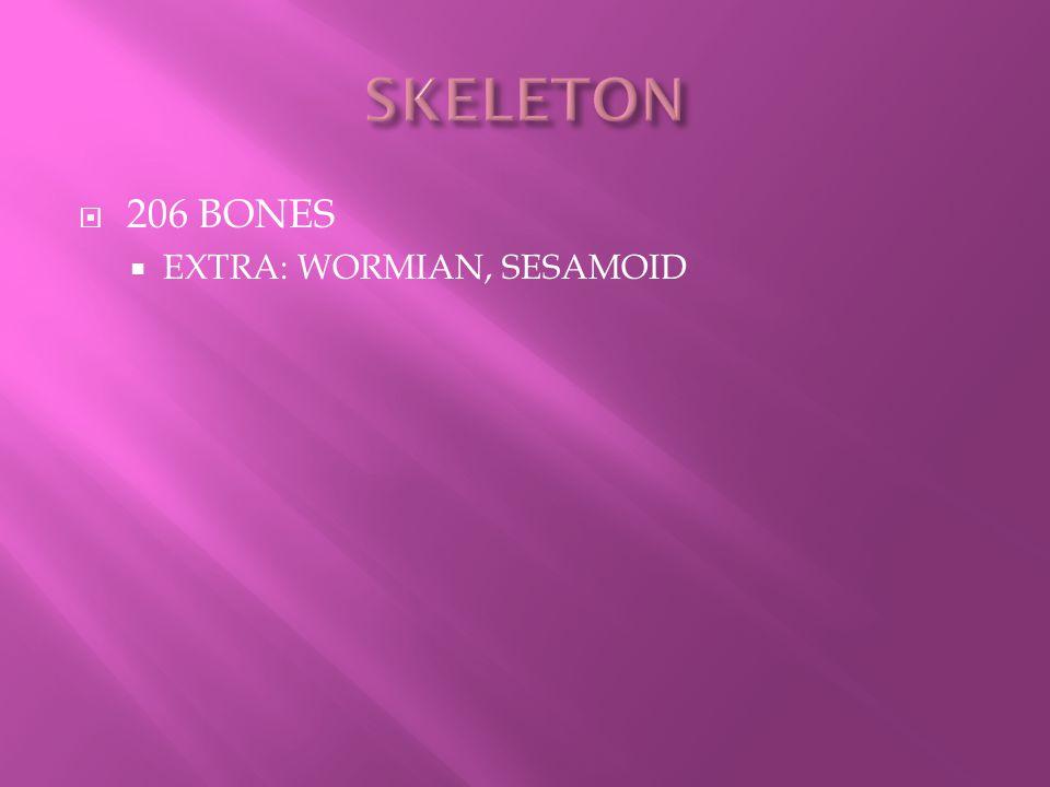 SKELETON 206 BONES EXTRA: WORMIAN, SESAMOID