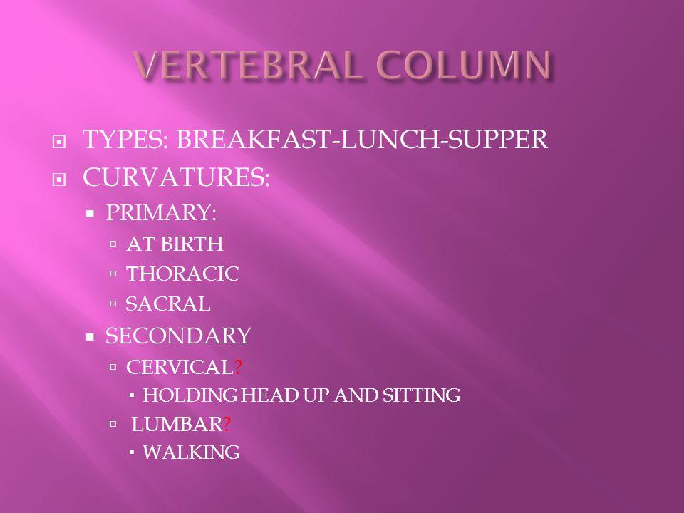 VERTEBRAL COLUMN TYPES: BREAKFAST-LUNCH-SUPPER CURVATURES: PRIMARY: