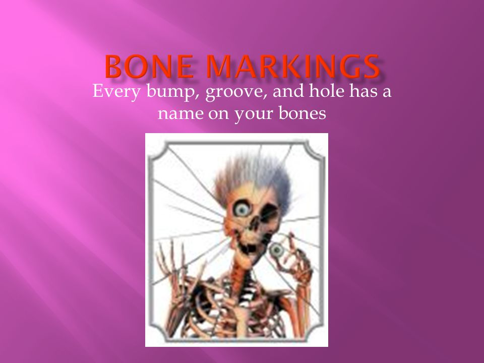 Every bump, groove, and hole has a name on your bones